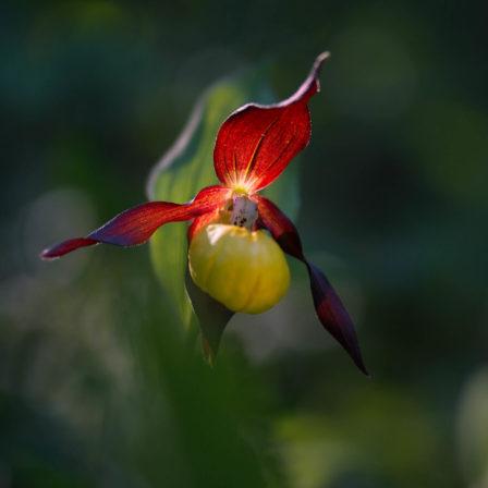 La Chair de l'orchidée
